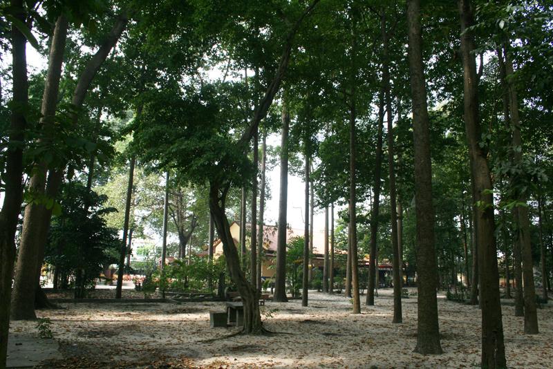 Chùa Bửu Quang - buu quang-30-rừng cây.jpg (662281 KB)